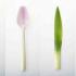 Βιοδιασπώμενα μαχαιροπήρουνα που μοιάζουν με λαχανικά